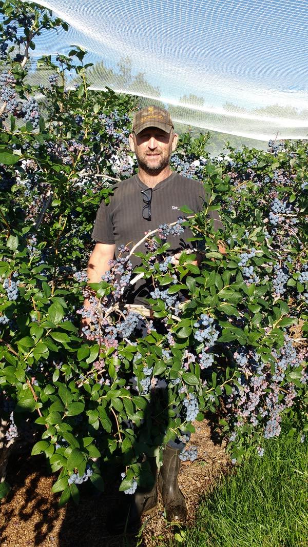 Rougemont Montérégie Gros plants de bleuets sucrés autocueillette